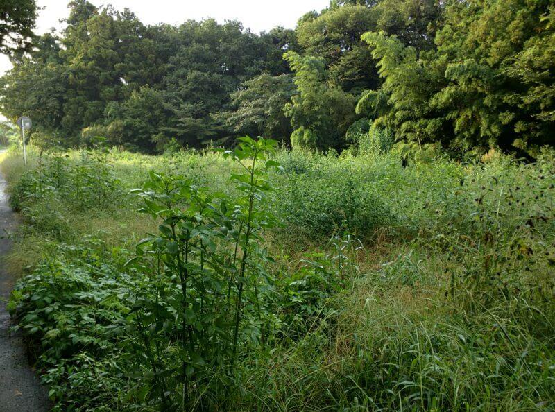 夏の畑と草